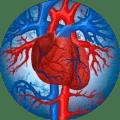 Активное кровообращение. Разогревающие массажные движения ускоряют кровоток, что уменьшает «шансы» на инфаркт и избавляет от отеков.
