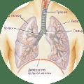 Хорошая работа дыхательной системы. Арома-масла хорошо лечат инфекции горла, носа и легких.
